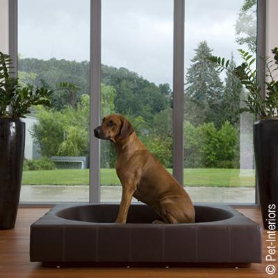 Pet-Interiors – Designermöbel für Hunde und Katzen : Unterbringung ...