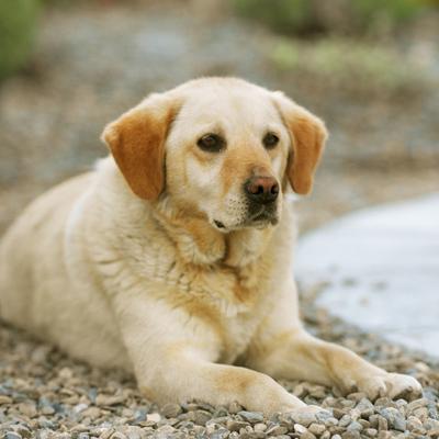 Die Beliebtesten Hunderassen Der Usa Erziehung Beschaftigung